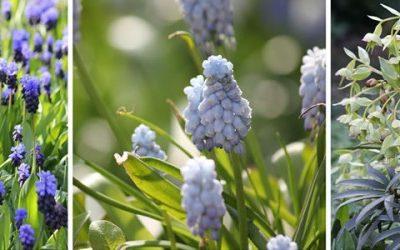 Februari: planten